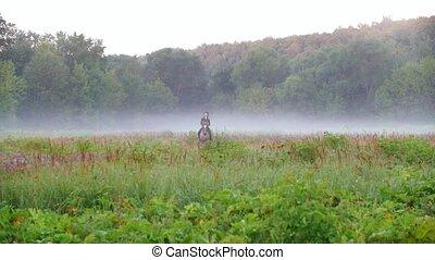 cheval, autour de, promenades, tout, tôt, champ, brouillard, girl, matin, cavalier