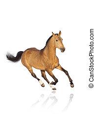 cheval, blanc, isolé