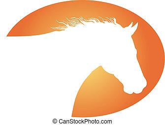cheval blanc, tête
