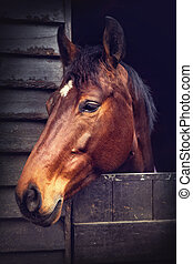 cheval brun, dans, écurie