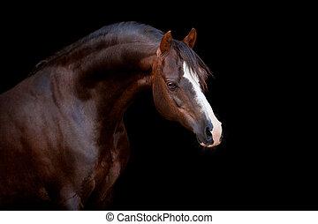 cheval brun, isolé, sur, noir