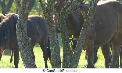 cheval brun, manger part, arbre, petit