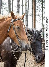 cheval brun, noir, headshot, fond