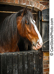 cheval, closeup