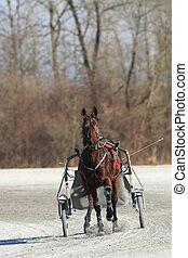 cheval, course harnais