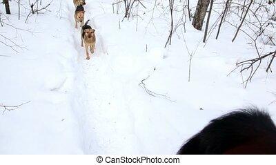 cheval, course, hiver, trois, chiens, derrière, jour