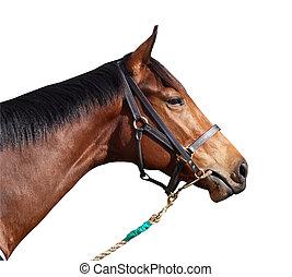 cheval course, licou