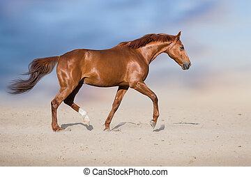 cheval, désert, trot