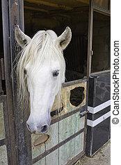 cheval, dans, écurie