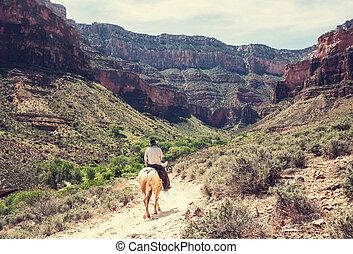 cheval, dans, grand canyon