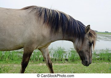 cheval, dans, les, ouvert, champ