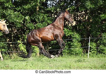 cheval, deux, combat, autre, étalons, chaque, trimestre