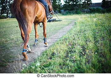cheval, espace, texte, champ, sentier, cavalier