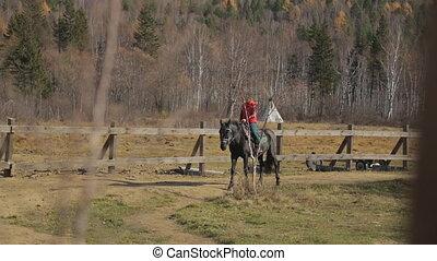 cheval, femme, ongulé, conjugal, marche, équitation animale, cercle, paddock., route, calmement