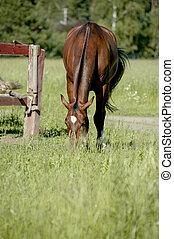 cheval frôlant