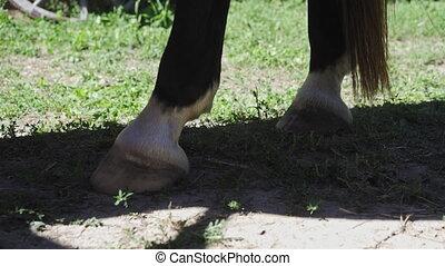 cheval, gros plan, debout, homme, enclos, peignes, sabot, ...