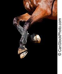 cheval, jambes, isolé, black.