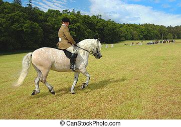 cheval, jockey, parc, essais, dressage
