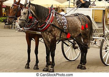cheval, krakow, rue., basilique, pologne, mary, chariots, ...