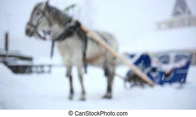 cheval lourd, hiver, harnessed, foyer, noël, chaud, concentré, snowfall., blured, pendant, changements, jour