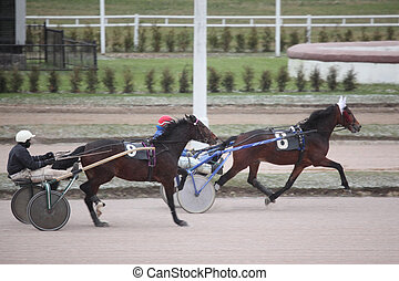 cheval, moscou, hippodrome, decembe, courses, trot