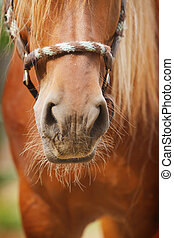 cheval, nez