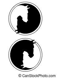 cheval, noir, blanc