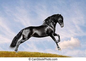 cheval noir, dans, champ