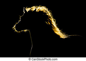 cheval noir, silhouette, isolé