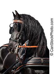 cheval, noir, tête, isolé