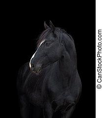 cheval, noir, tête