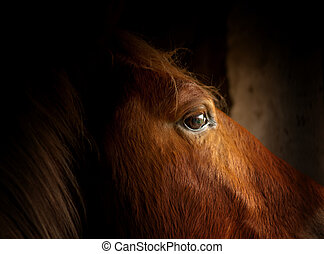 cheval, oeil, closeup