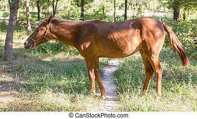 cheval, parc, nature