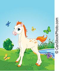 cheval, poulain, pré