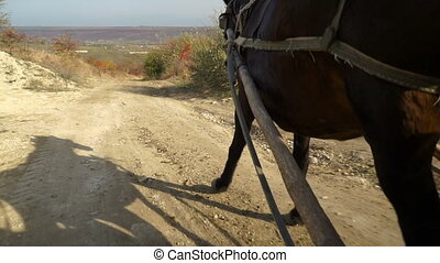 cheval, prise vue., vue, route, steadicam, village, ahead., ...