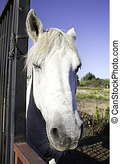 cheval, regarder