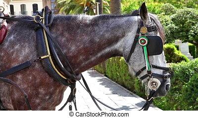 cheval, séville