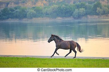 cheval sauvage, rivière danube