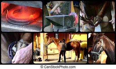 cheval, soin