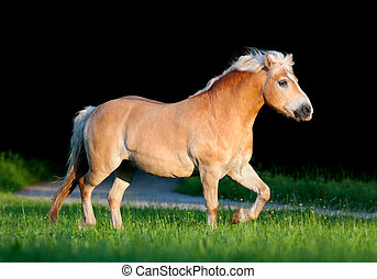 cheval, summer., courant, jaune