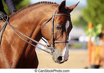 cheval, tête, lumière soleil, matin
