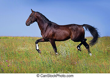 cheval, trot