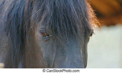 cheval, yeux