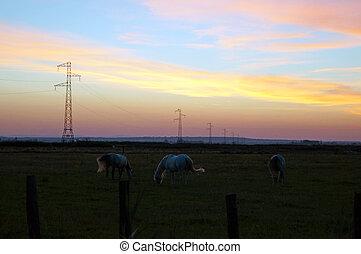 chevaux, à, coucher soleil