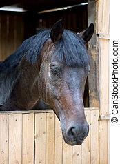 chevaux, écurie