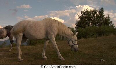 chevaux, 03