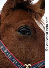 chevaux, 3