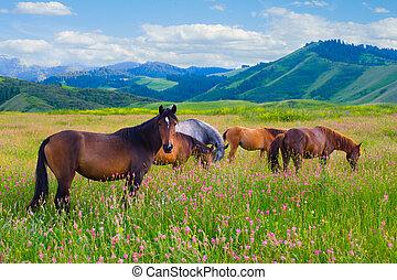chevaux, are, frôlé, sur, a, pré