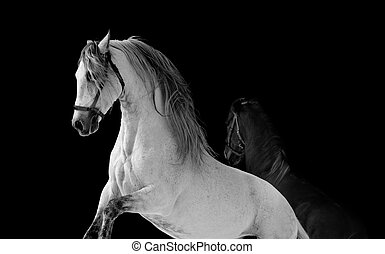 chevaux, baston