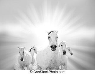 chevaux, blanc, mer